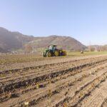 Salatpflanzung 2021